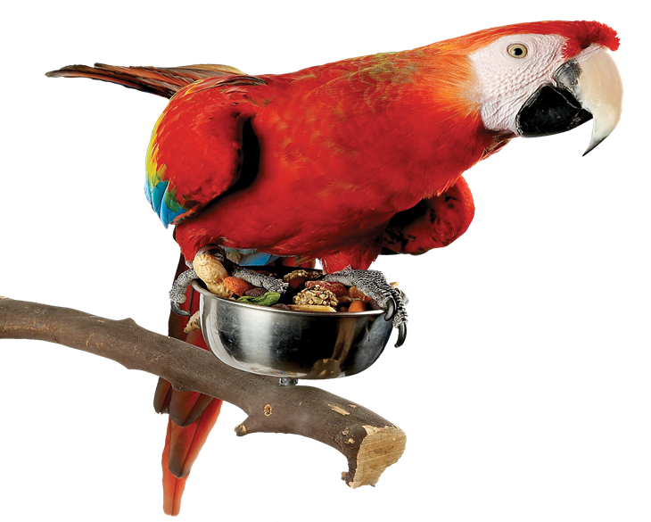 Red Macaw Eating Bird Food