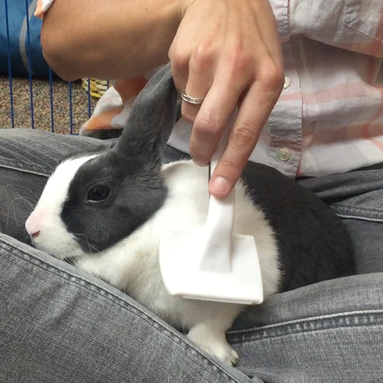 Pet Rabbit Grooming